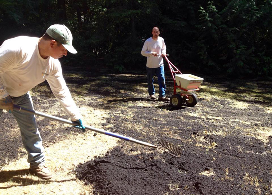 topdressing lawn with compost