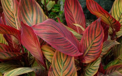 5 Tropical Plants for Zone 8