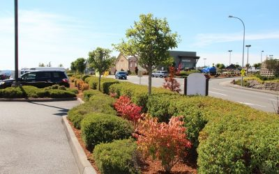 New Commercial Landscape Maintenance Sites in Poulsbo