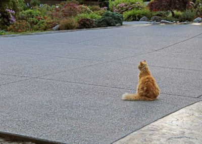 Decorative exposed aggregate concrete driveway with cat and plants