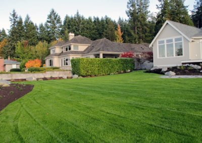 Lawn from hydroseed in Seabeck, WA