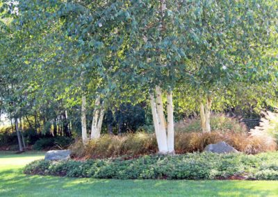 Landscaping bed with rocks and trees. Landscape designed by Emily Russell, ASLA
