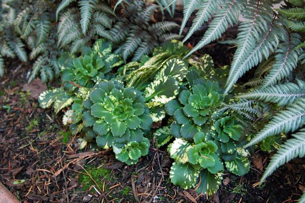 landscape plant companions