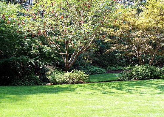 lawn renovation in silverdale