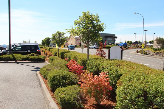 commercial landscape maintenance poulsbo