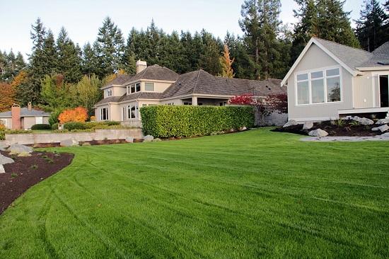 new lawn no brown spots